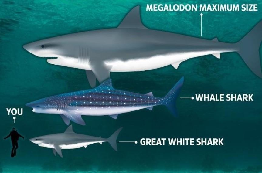 ikan hiu megalodon yang menakutkan