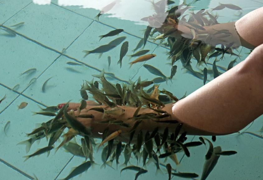 terapi ikan di pemandian air panas ciseeng bogor